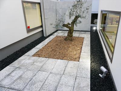 中庭(樹齢60年のオリーブの木)
